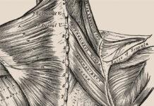 La storia del corpo umano